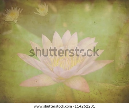 Close-up inside of beautiful violet lotus on grunge background