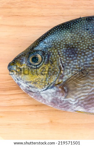 Close up Java rabbitfish, Bluespotted spinefish or Streaked spinefoot fish on a wood background - stock photo