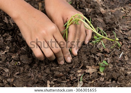 Close up Kid hand planting young tree - stock photo
