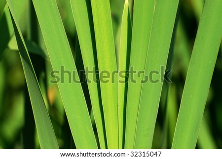 Close up look of a reed bud at lakeside, elk island national park, alberta, canada