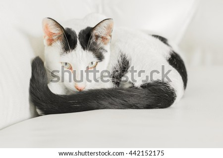 Close up lovely cat on sofa,cat on a sofa, sleeping cat face close up, small sleepy lazy cat, lazy cat on day time, sleepy cat close up. - stock photo
