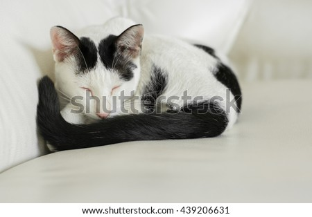 Close up lovely cat sleeping on sofa,Sleeping cat on a sofa, sleeping cat face close up, small sleepy lazy cat, lazy cat on day time, sleepy cat close up. - stock photo