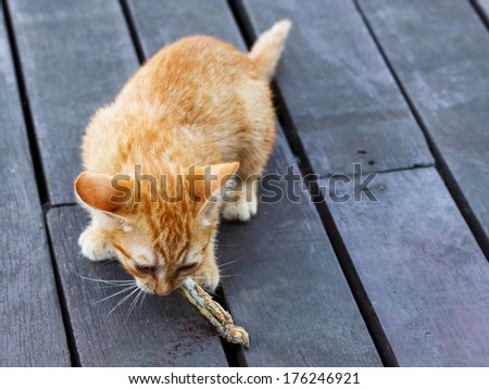 Close up lovely Thai small kitten eating fish on brown color wooden floor - stock photo