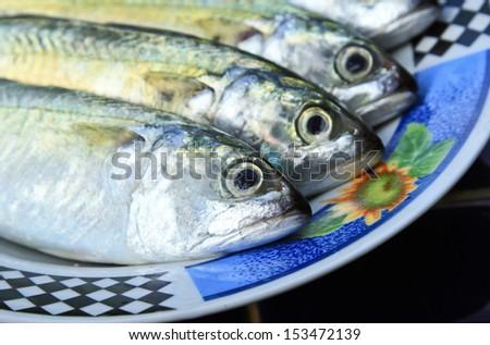 Close up mackerel fish in plate./Mackerel Fish. - stock photo