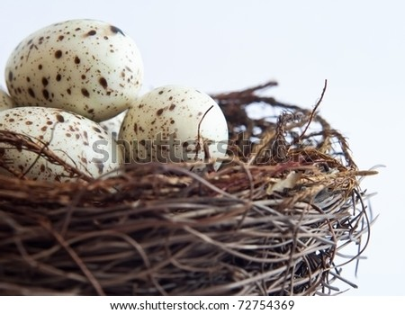 Close up (macro) of bird's nest containing fake speckled eggs. - stock photo