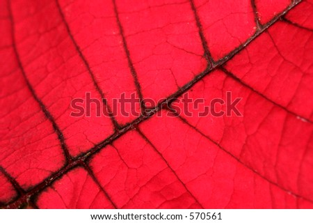 Close up macro shot of a red autumn leaf