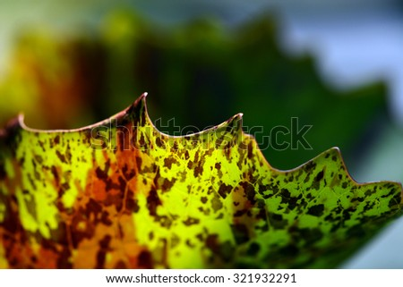 close up macro shot of lotus leaf for abstract background - stock photo
