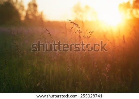 close up meadow grass in evening sunlight, vintage toned - stock photo