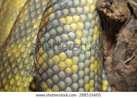 close up Moluccan Python snake skin - stock photo