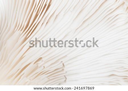 Close up mushroom - stock photo