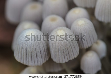 close up mushroom in deep forest, mushrooms growing on a live tree in the forest - stock photo