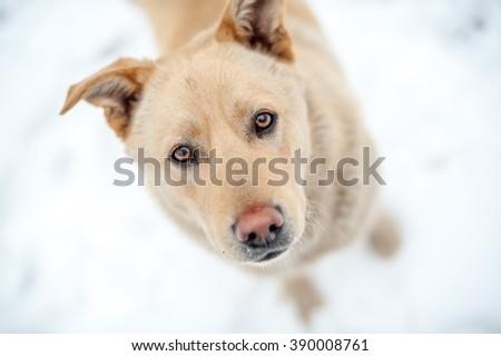 Close-up non-pedigree dog portrait - stock photo