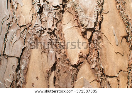 Close up o of ld pine tree bark texture