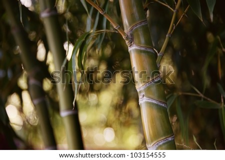 Close-up of a bamboo plant. - stock photo
