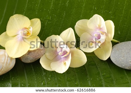 close up of a banana leaf �yellow orchid and stones