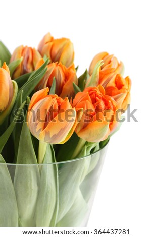 Close-up of a beautiful bouquet of orange tulips in a glass vase. Isolated on white background - stock photo