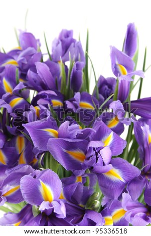 Close-up of a beautiful bouquet of purple irises. Isolated on white background