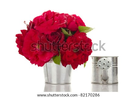 Close-up of a beautiful bouquet of red roses in a bucket of poison deleznom steel watering can. Isolated