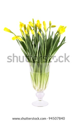 Close-up of a beautiful bouquet of yellow daffodils in a glass vase. Isolated on white background