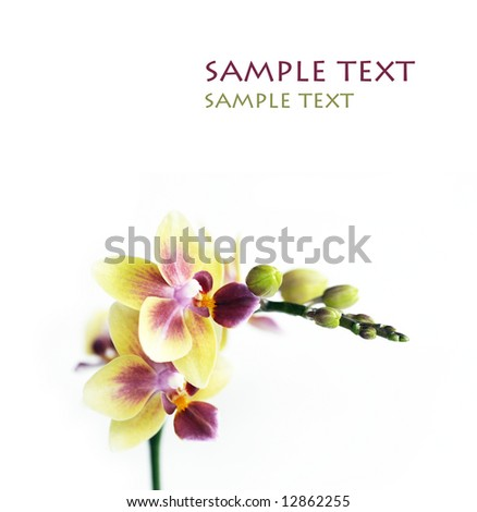 close-up of a beautiful orchid against white background - stock photo