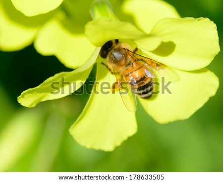 close up of a bee in a yellow flower