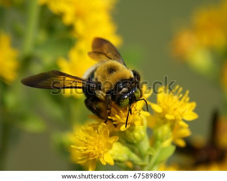 Close up of a bee on a flower - stock photo