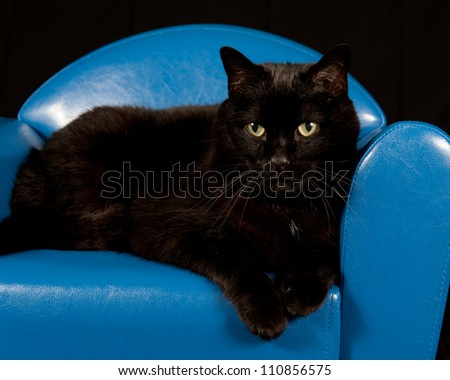 Close up of a black cat sitting in a blue mini chair with black background - stock photo