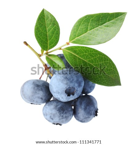 Close up of a blueberry branch isolated over white - stock photo