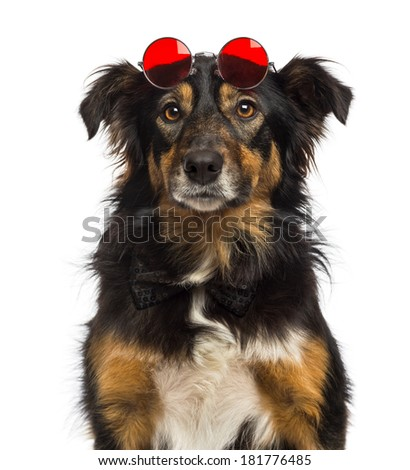 Close-up of a Border collie wearing red round lenses, isolated on white - stock photo