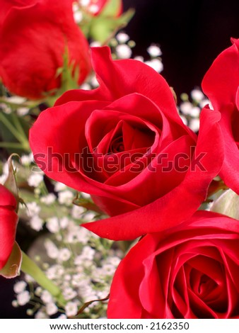 Close up of a bouquet of red roses. - stock photo