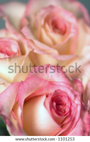 Close-up of a bouquet of roses. Shallow depth of field with focus on front lower flower.
