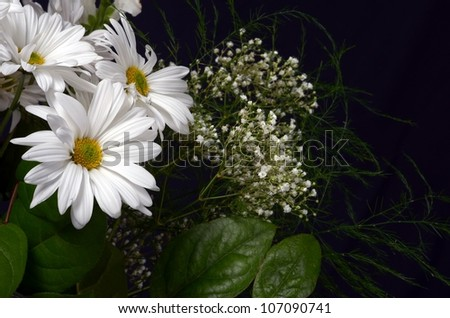 Close up of a Bouquet of White Flowers on a Black Background