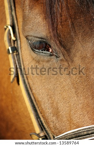 Close-up of a brown horse with a bridle - stock photo
