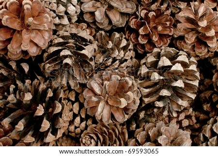 Close up of a bunch of cones - stock photo