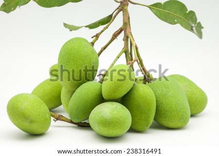 Close up of a bunch of green or raw fresh mangoes with green leaf and branch for sour taste fruit on white background  - stock photo