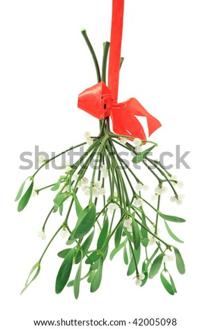 Close-up of a bunch of mistletoe (Viscum album) with berries, isolated on a white background.
