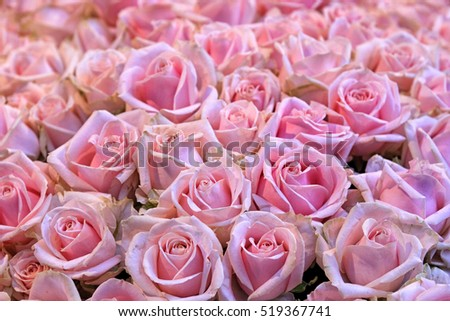 Close up of a bunch of pink roses
