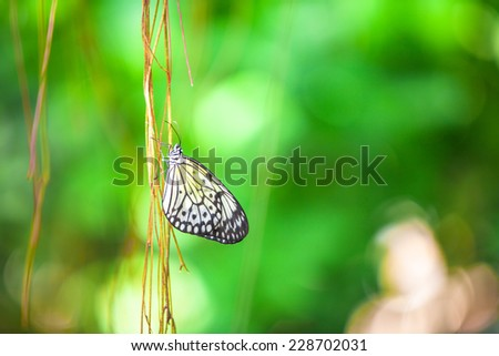Close up of a butterfly on branch with green background - stock photo