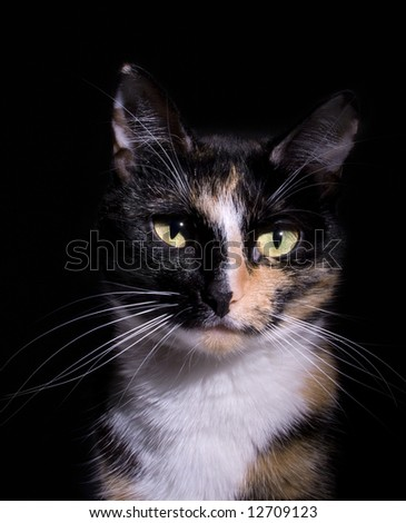 Close up of a cat's face - stock photo