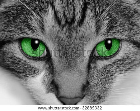 Close-up of a cat's face with selective coloring of her bright green eyes.