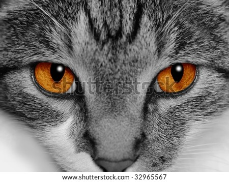 Close-up of a cat's face with selective coloring of her bright orange eyes. - stock photo