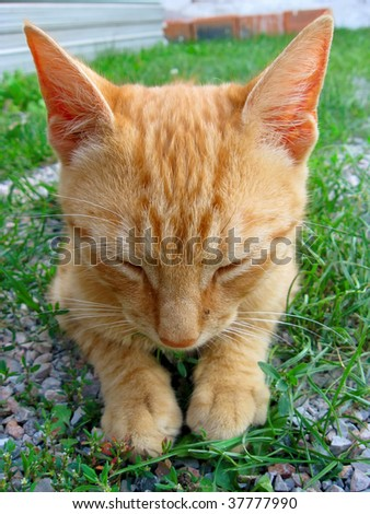 Close up of a cat sleeping in the grass - stock photo