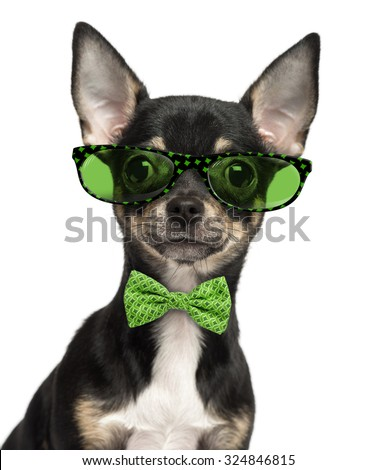Close-up of a Chihuahua puppy wearing glasses and a bow tie isolated on white - stock photo