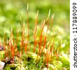 close-up of a colorful moss with spores - stock photo