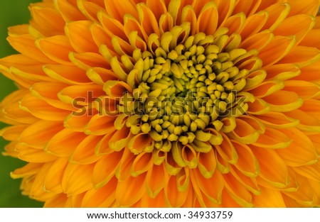 Close-up of a colorful sunflower showing its patterns, details, and vibrant colors