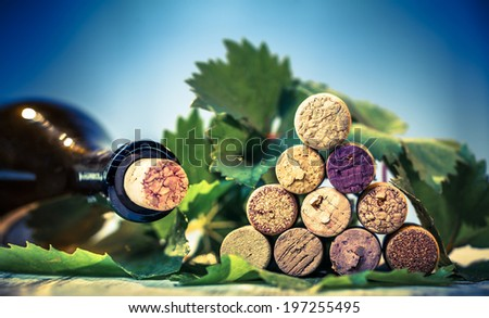 Close up of a corks wine with grape leaves and wine bottle. Selective focus. - stock photo