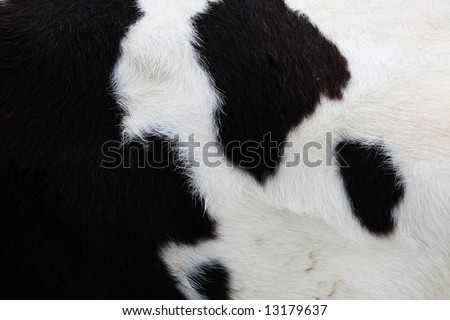 close-up of a cow-hide - stock photo