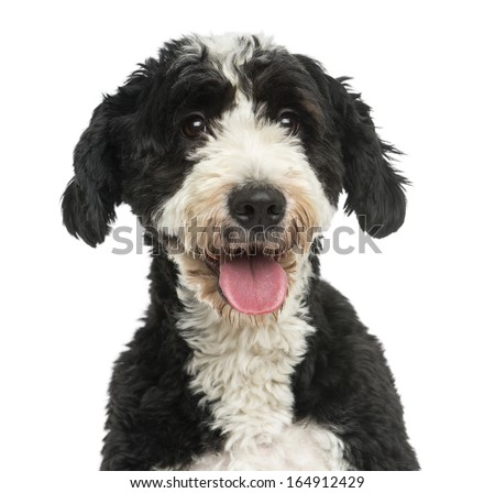 Close-up of a Crossbreed dog panting, 2 years old, isolated on white - stock photo