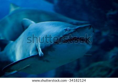 close up of a curious shark - stock photo