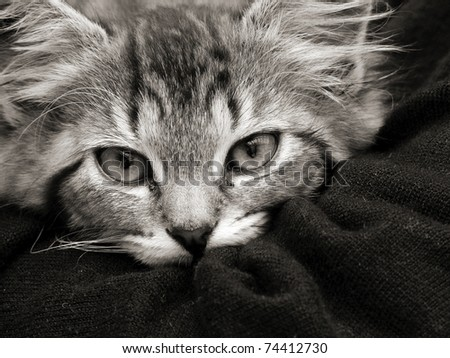 Close up of a cute fluffy tabby kitten - stock photo